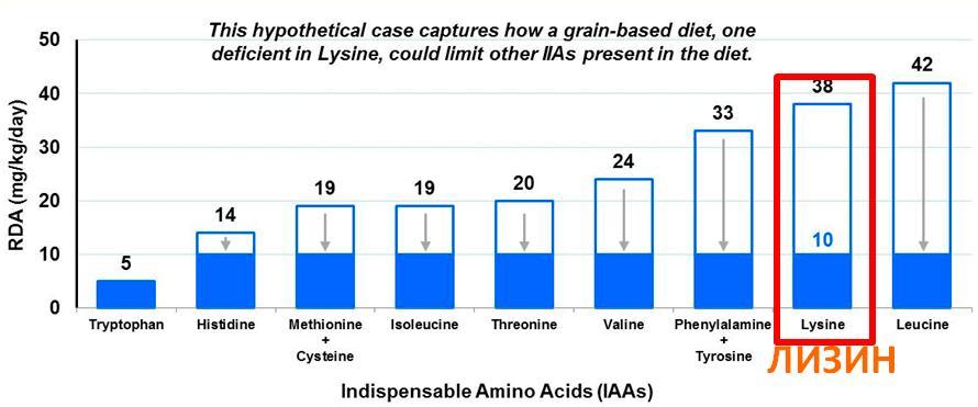 Если лизина в пище недостаточно, то и усвояемость остальных аминокислот ухудшается.