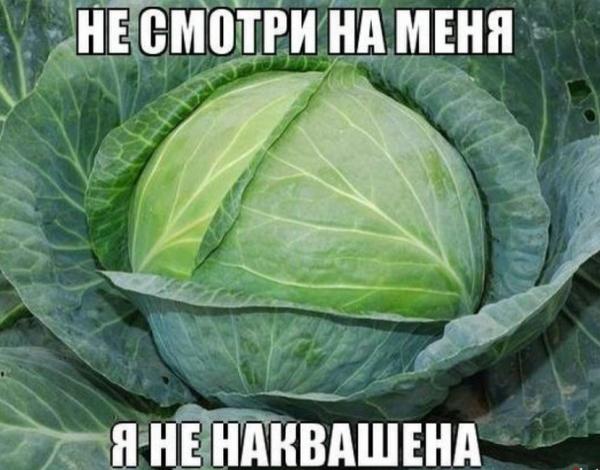 9 доводов за и против квашеных капусты и овощей