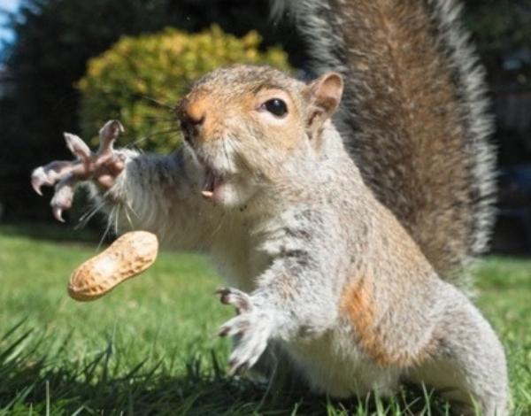 Зачем есть орехи и семечки?