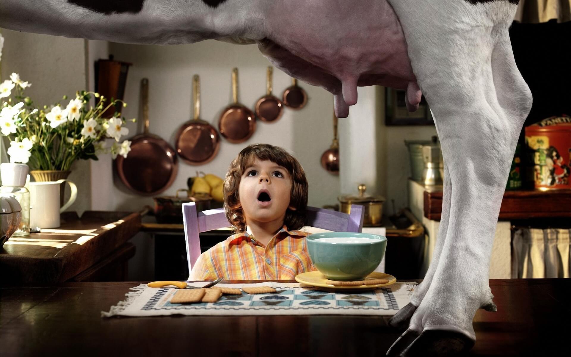 Молоко или кальций? Как употребление молока разрушает ваши кости